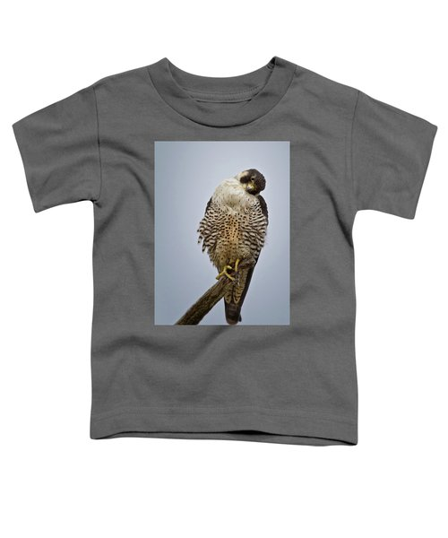 Falcon With Cocked Head Toddler T-Shirt