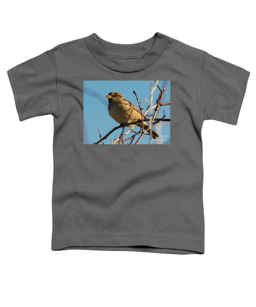 Female House Sparrow Toddler T-Shirt by Mike Dawson