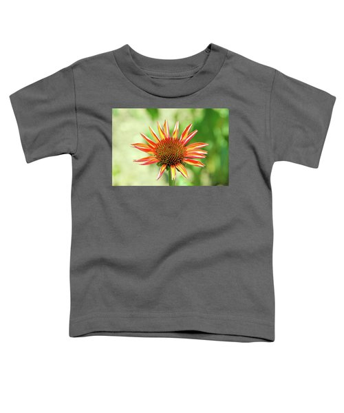 Fibonacci Toddler T-Shirt