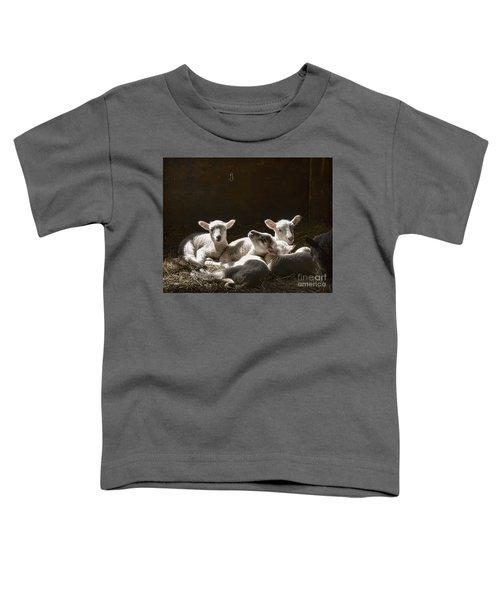 Four Lambs Toddler T-Shirt