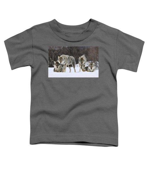 Gray Wolves Norway Toddler T-Shirt