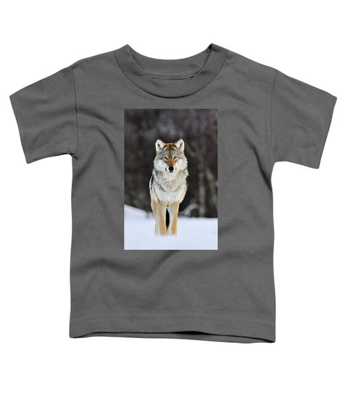 Gray Wolf In The Snow Toddler T-Shirt