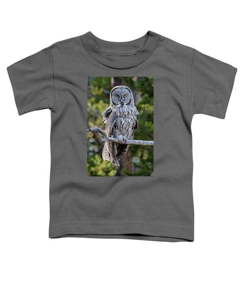 Great Grey Owl Yellowstone Toddler T-Shirt