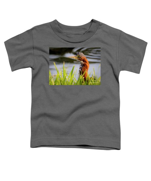 Green Heron Closeup  Toddler T-Shirt