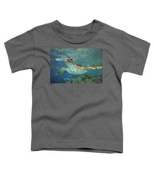 Green Sea Turtle Chelonia Mydas Toddler T-Shirt