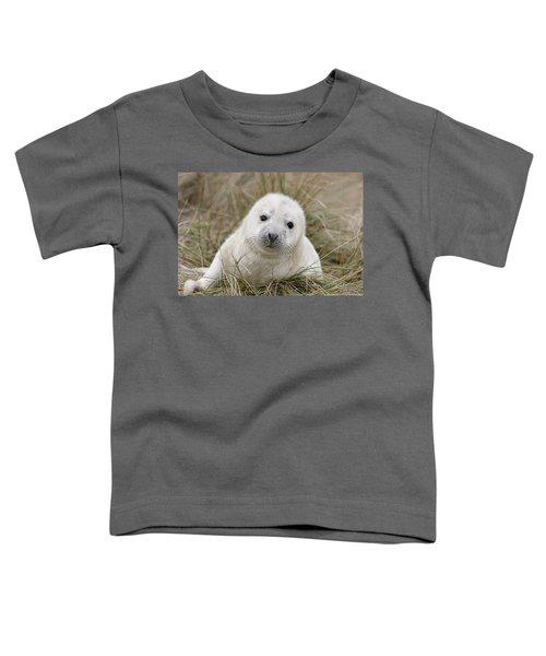 Grey Seal Pup Toddler T-Shirt