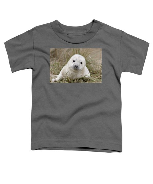 Grey Seal Pup Toddler T-Shirt