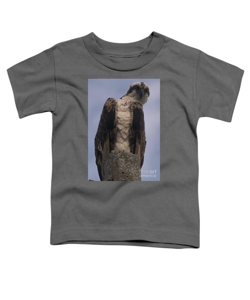 Hawk Attitude Toddler T-Shirt