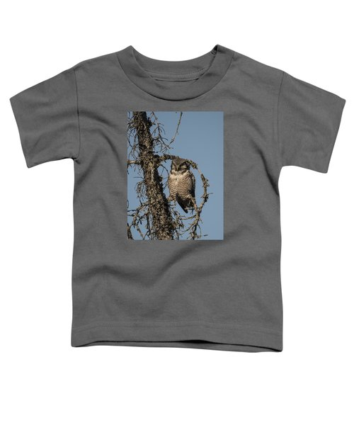 Hawk Owl Gaze Toddler T-Shirt