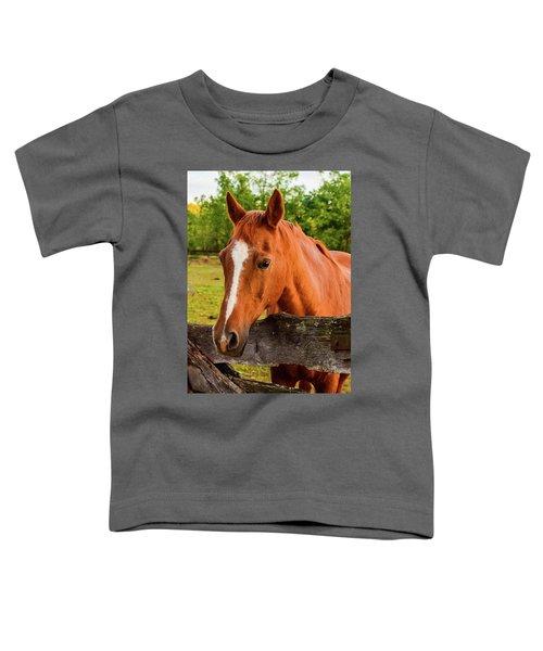Horse Friends Toddler T-Shirt