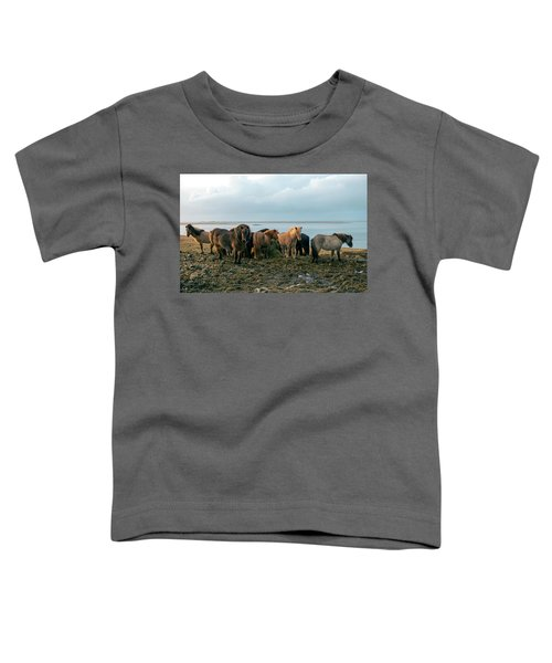 Horses In Iceland Toddler T-Shirt by Dubi Roman