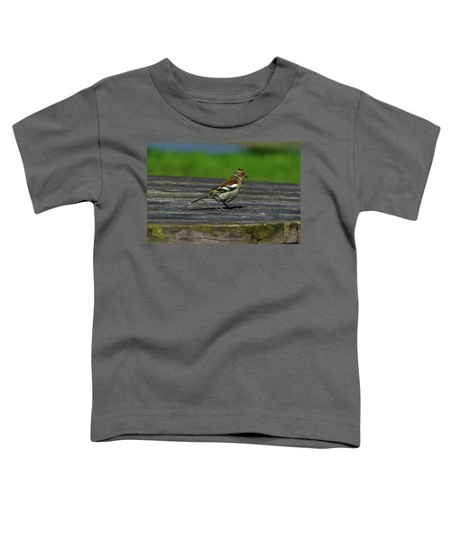 House Finch Toddler T-Shirt