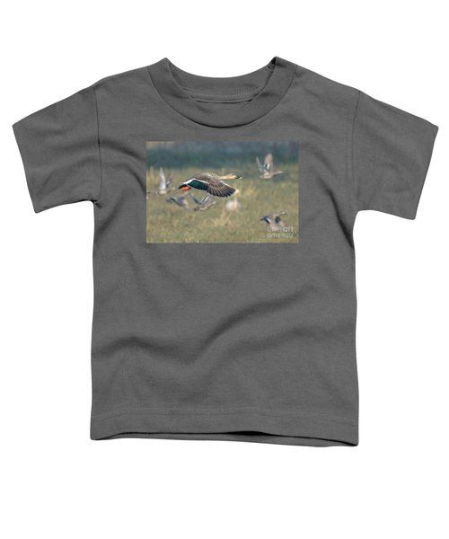 Indian Spot-billed Duck 01 Toddler T-Shirt