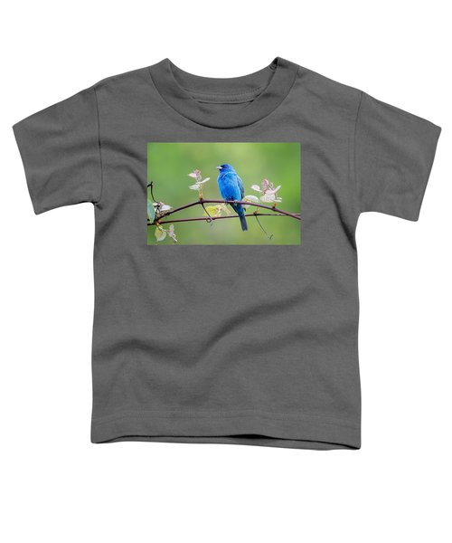 Indigo Bunting Perched Toddler T-Shirt by Bill Wakeley