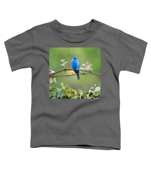 Indigo Bunting Perched Square Toddler T-Shirt by Bill Wakeley