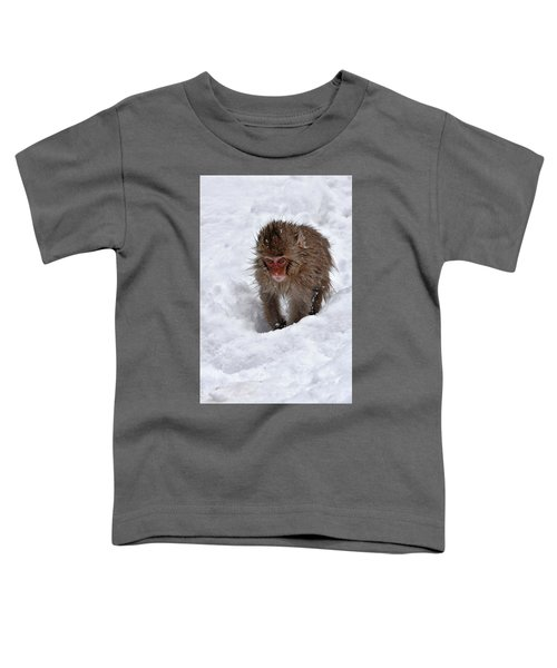 Its Here Somewhere Toddler T-Shirt
