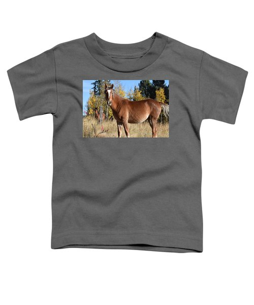 Horse Cr 511 Divide Co Toddler T-Shirt