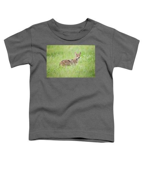 Juvenile Coyote Toddler T-Shirt