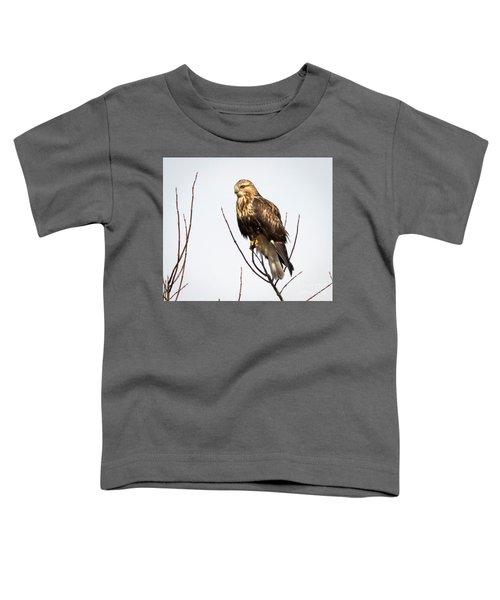 Juvenile Rough-legged Hawk  Toddler T-Shirt by Ricky L Jones