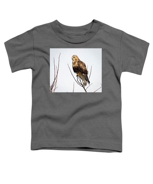 Juvenile Rough-legged Hawk  Toddler T-Shirt