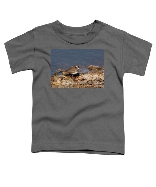 Kildeer On The Rocks Toddler T-Shirt