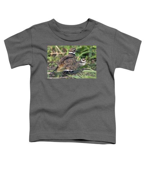 Killdeer With Chicks Toddler T-Shirt by Craig Strand
