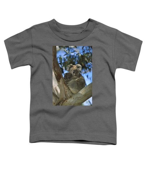 Koala Phascolarctos Cinereus Mother Toddler T-Shirt by Konrad Wothe
