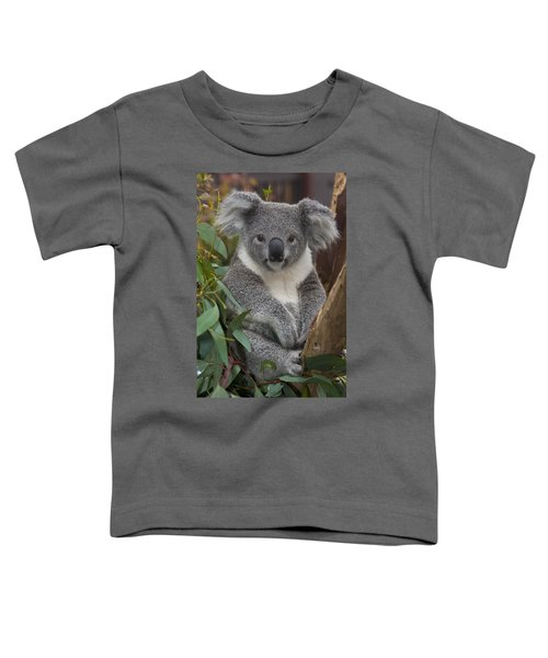Koala Phascolarctos Cinereus Toddler T-Shirt by Zssd