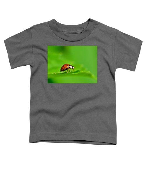 Lady Bug Toddler T-Shirt