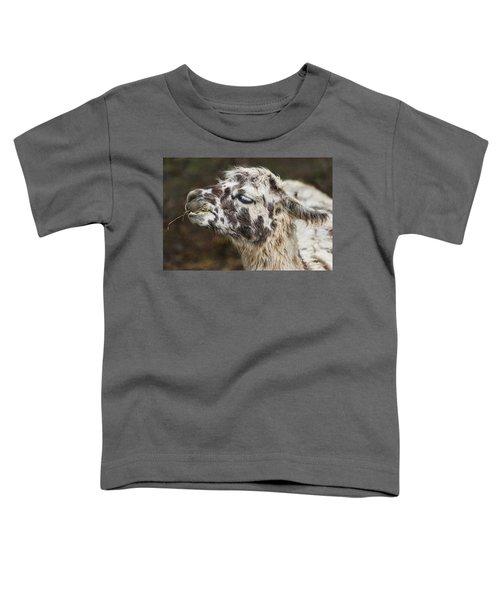 Lady Llama Toddler T-Shirt