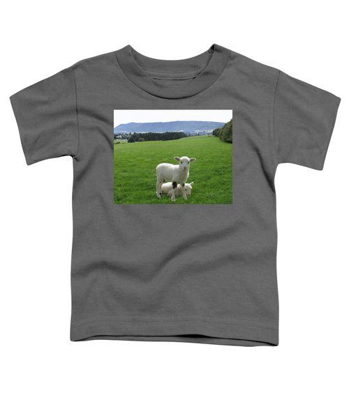Lambs In Pasture Toddler T-Shirt by Dominic Yannarella
