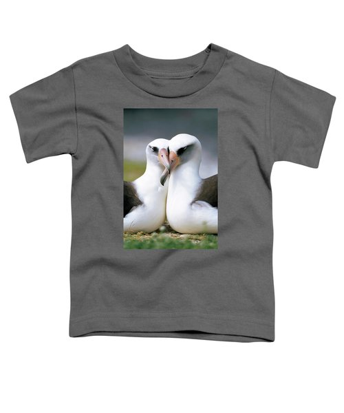 Laysan Albatross Phoebastria Toddler T-Shirt by Tui De Roy