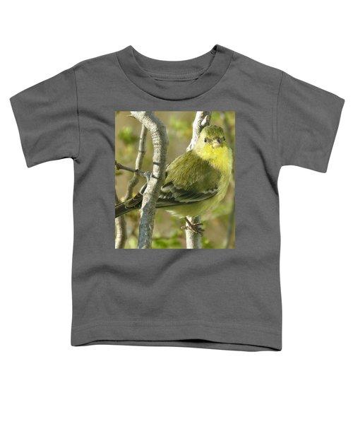 Lesser Goldfinch 1 Toddler T-Shirt