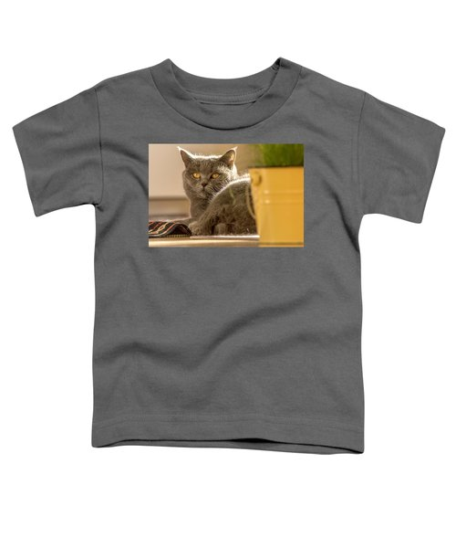 Lilli The Cat Toddler T-Shirt