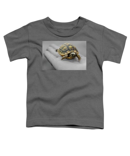 Little Turtle Baby Toddler T-Shirt