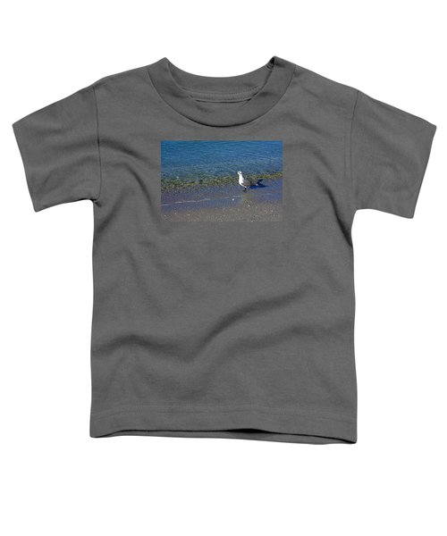Lone Seagull At Miramar Beach In Naples Toddler T-Shirt