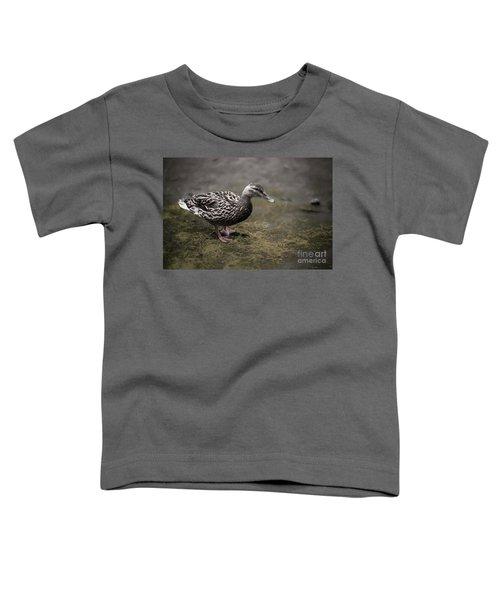 Malard,duckling Toddler T-Shirt