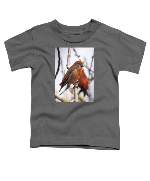 Male Red Crossbills Toddler T-Shirt by Robert Potts