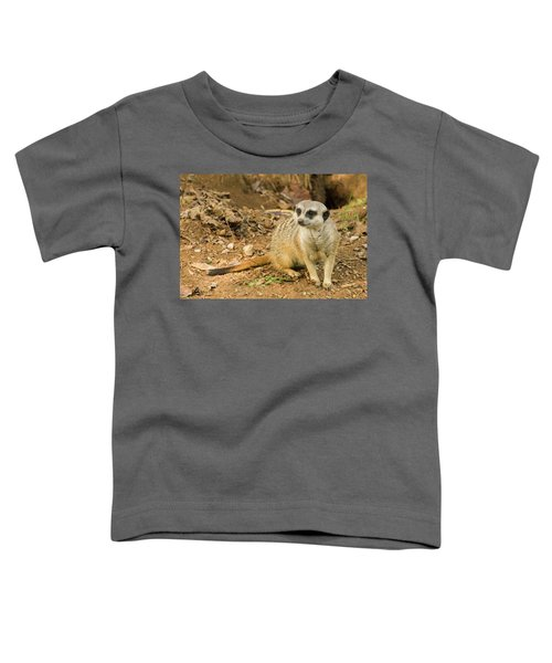 Meerkat Toddler T-Shirt