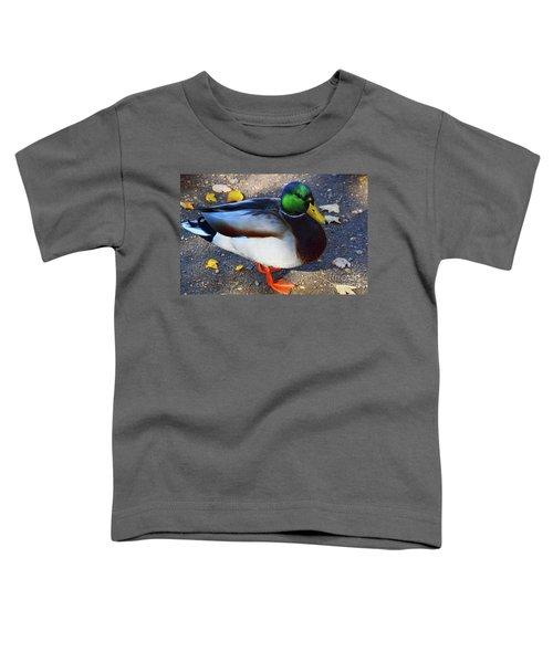 Northern Male Mallard Duck Toddler T-Shirt