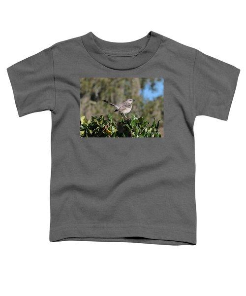 Northern Mockingbird Toddler T-Shirt by Carol Groenen