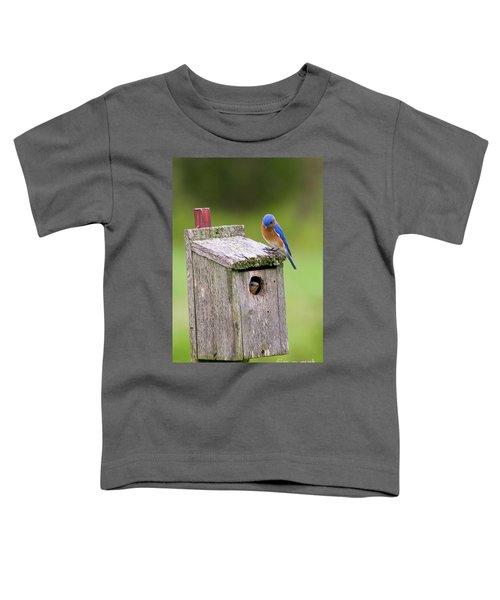 Peek A Boo Blue Toddler T-Shirt