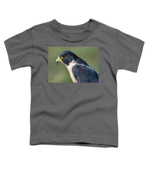 Peregrin Falcon Toddler T-Shirt