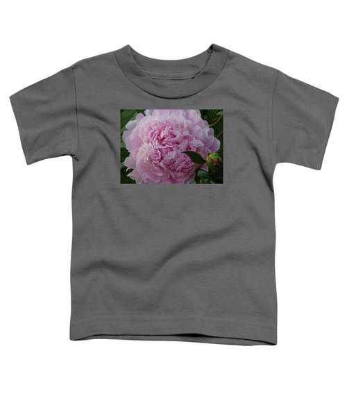 Perfection In Pink Toddler T-Shirt