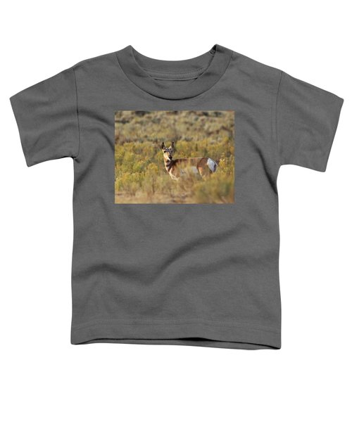 Pronghorn Doe Toddler T-Shirt