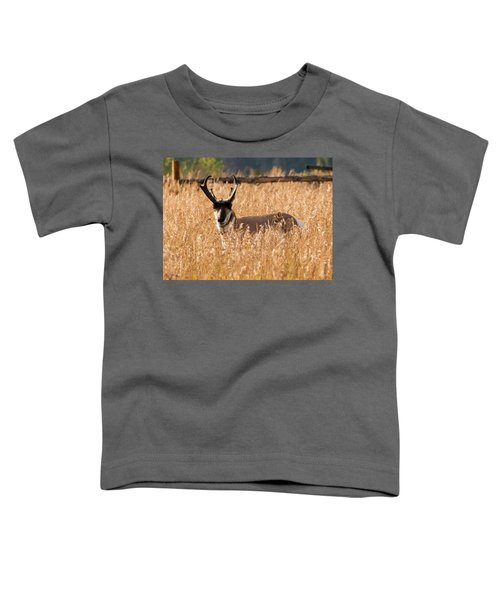 Pronghorn Toddler T-Shirt