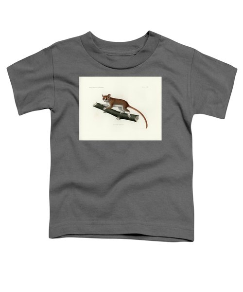Pygmy Mouse Lemur Toddler T-Shirt