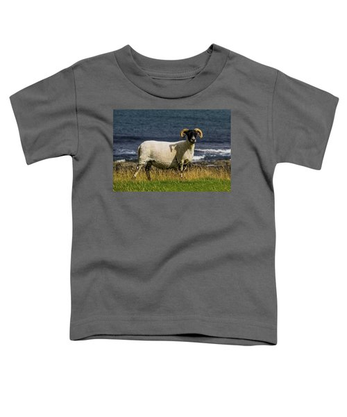 Ram With Attitude Toddler T-Shirt