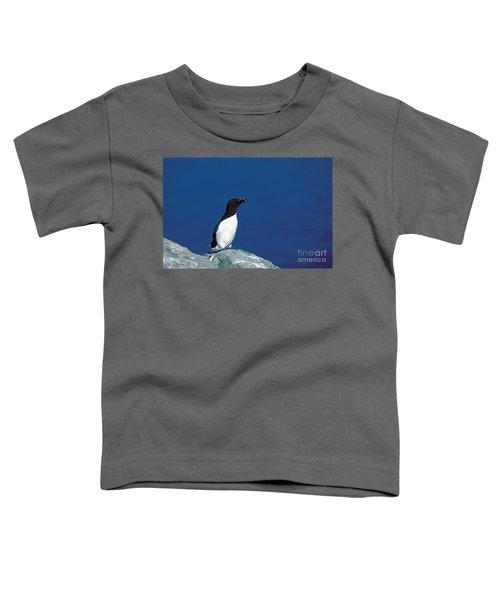 Razor-billed Auk Alca Torda Toddler T-Shirt