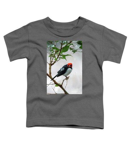 Red Capped Cardinal Toddler T-Shirt